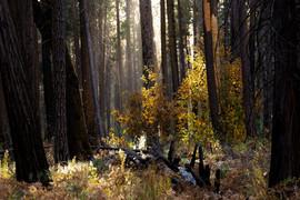 YosemiteFairytale.jpg