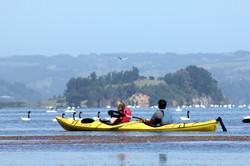 60 Kayak entre Cisnes Budi