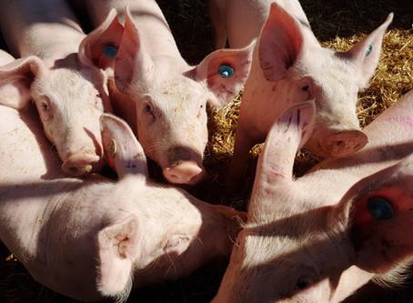 Video: Einsatz für artgerechte Tierhaltung