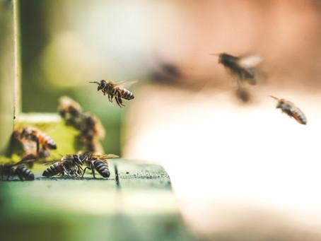 #11 Mehr Lebensraum für Bienen und Insekten