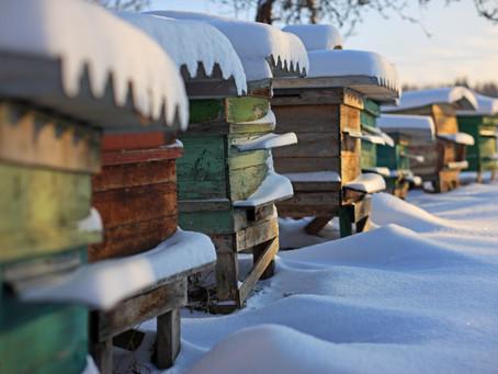 Was machen Bienen im Winter?