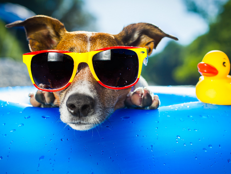 How to Keep Your Pets Safe and Happy This Summer