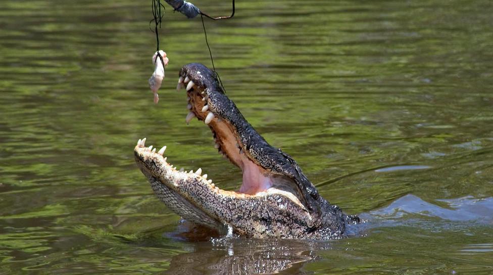 40__Il_y_a_des_pièges_à_alligators.jpg