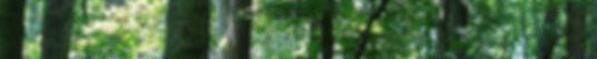 1200px-BeltWoods1a - Copy banner.jpg