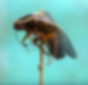 Schermafbeelding 2019-08-28 om 12.04_edi