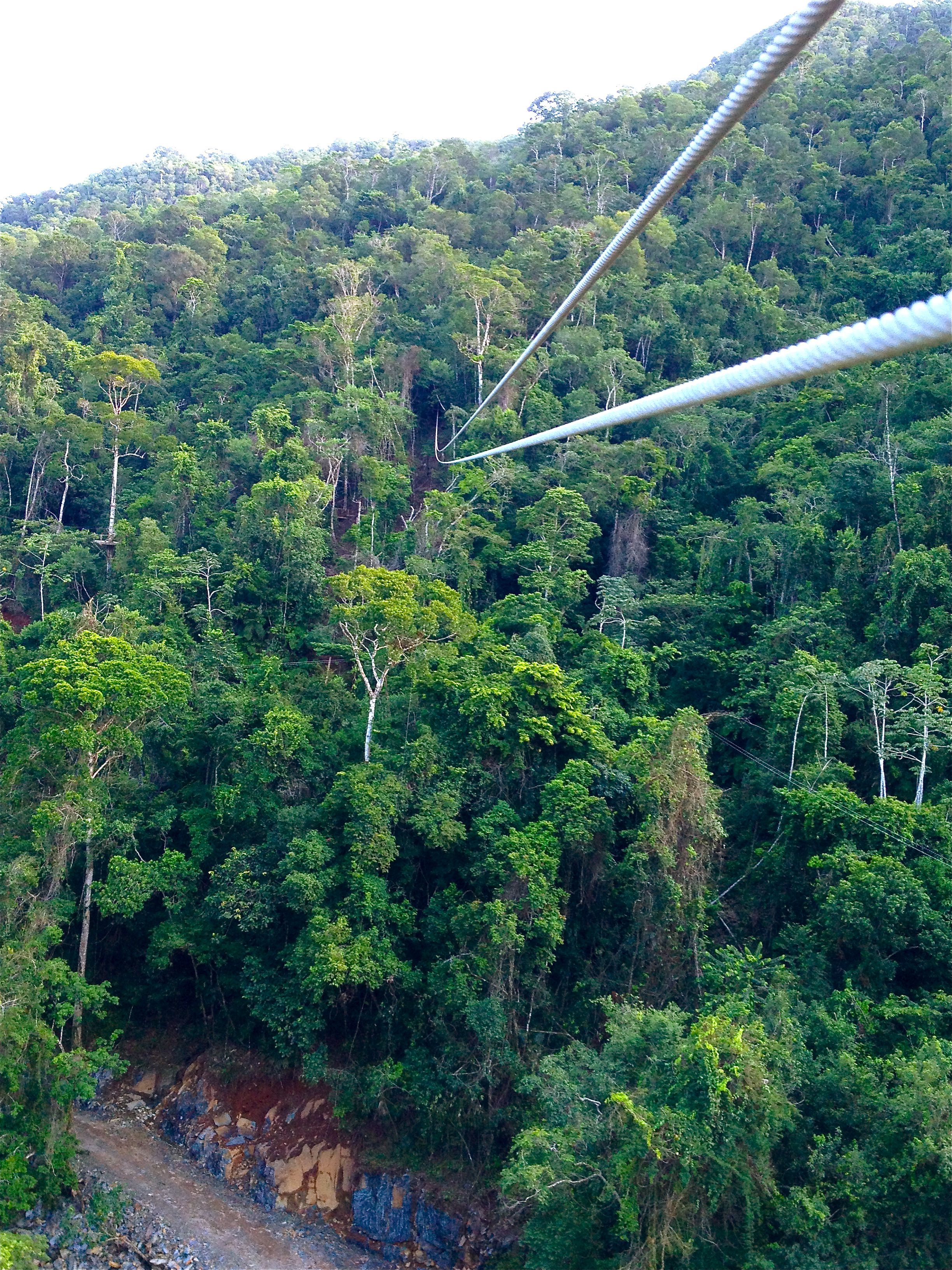 Jungle Zip Line
