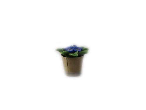 Annansilmä kukkakynttilä, aidonnäköinen kukkakynttilä, pöytäkynttilä