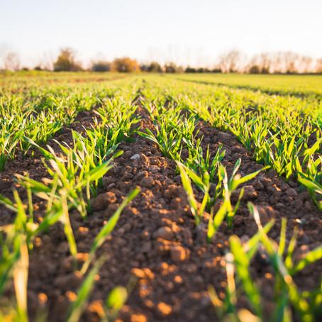 Les véritables impacts de notre alimentation sur l'environnement