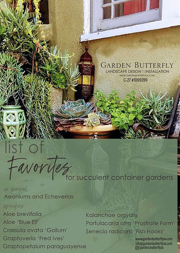 List of Favorite succulents for containe