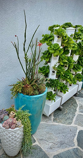 Vertical vegetable garden with succulent container gardens by Garden Butterfly