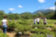 visita a Reserva Ecológica de Guapiaçu em Cachoeiras de Macacu no Rio de Janeiro
