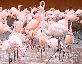 flamingos-standing-water.jpg