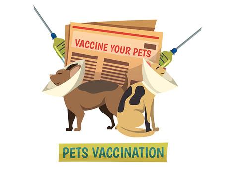 גורים וחיסונים