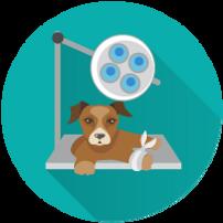 icons_כירורגיה כללית.png