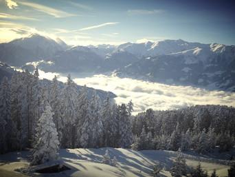 Suriro evolves to Austria - see where: