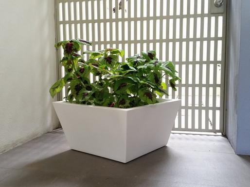 Tips para cambiar tus plantas de maceta