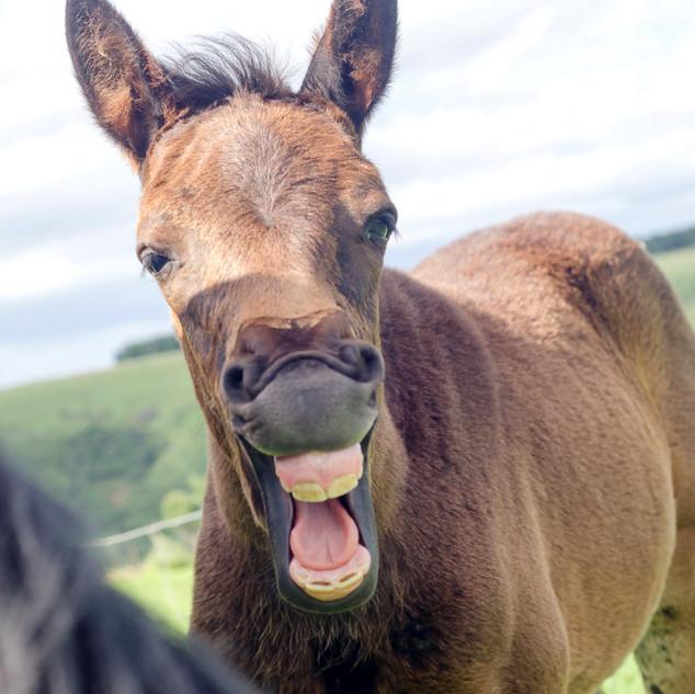 animals mule.jpg