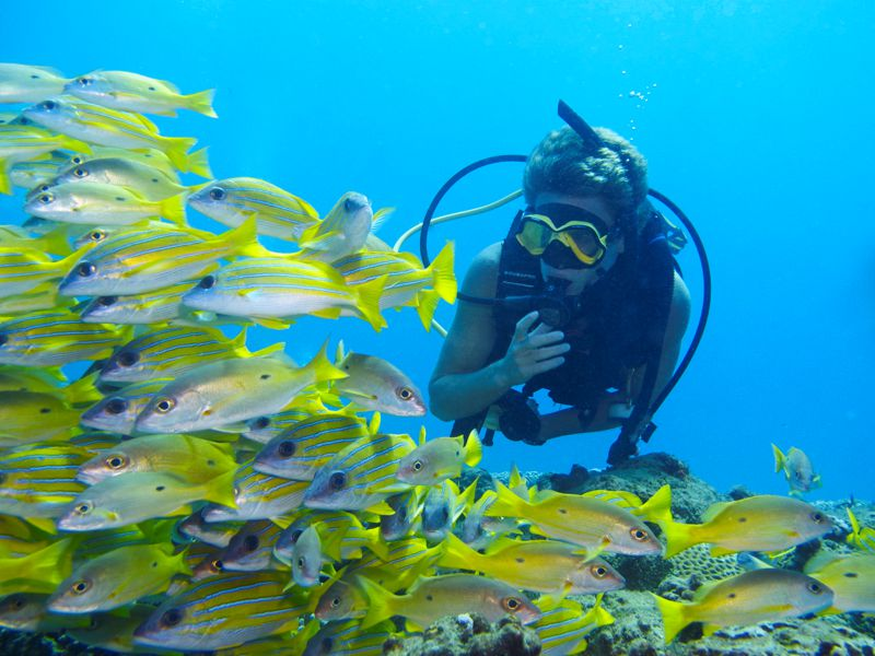 Diving-Coral-Divers-Sodwana-Bay-Underwater-13