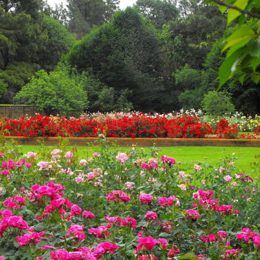 johannesburg_botanical_gardens
