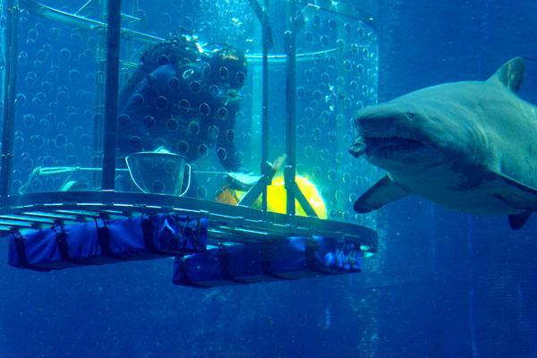 feeding-the-sharks-at-ushaka-marine-world-13