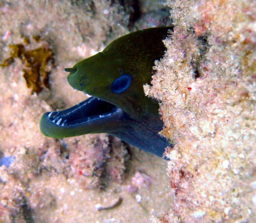 Castelo-Do-Mar-Scuba-Diving-1