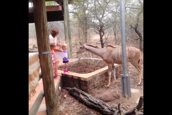 Ama-Zing African Safaris Lodge