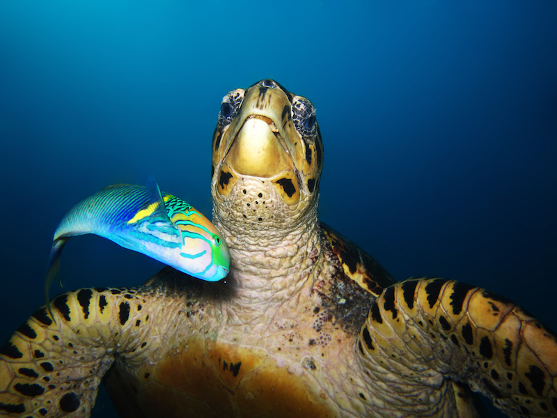 Diving-Coral-Divers-Sodwana-Bay-Underwater-8