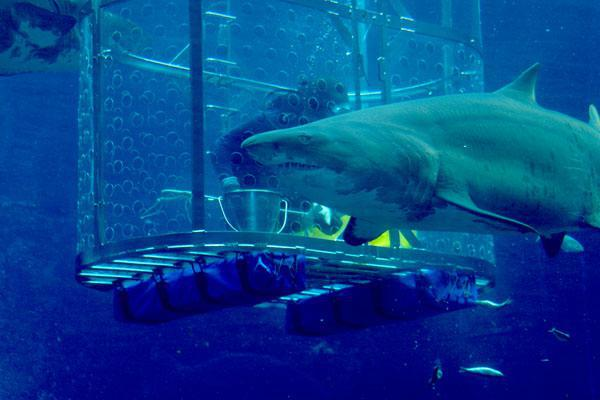 feeding-the-sharks-at-ushaka-marine-world-10