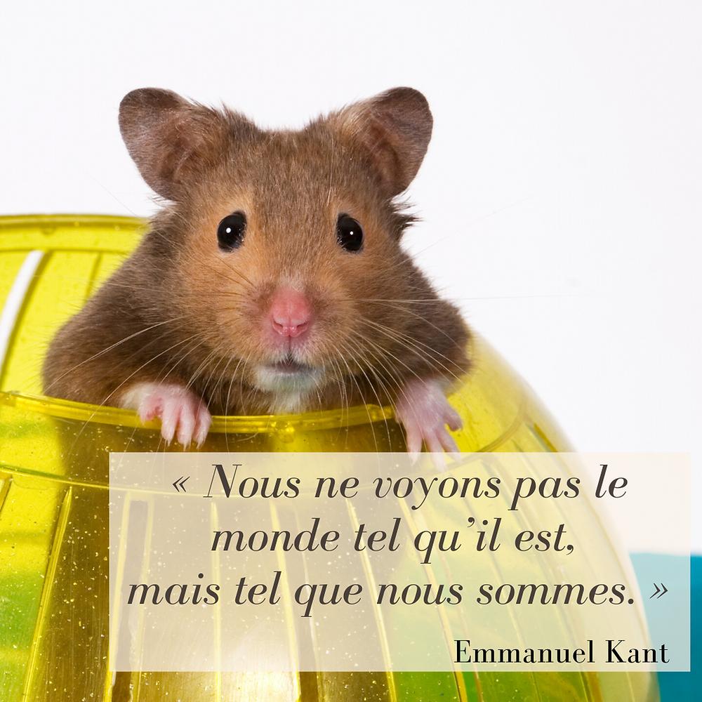 Citation Kant
