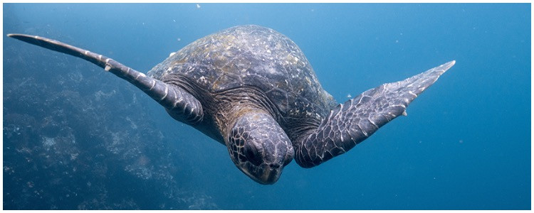 Family travel in the Galapagos Island with turtles and wildlife