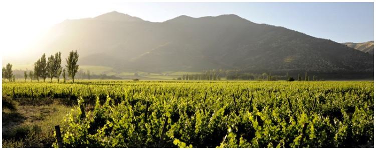 Cultural vacation in Chile's wine country - Santa Rita vineyard