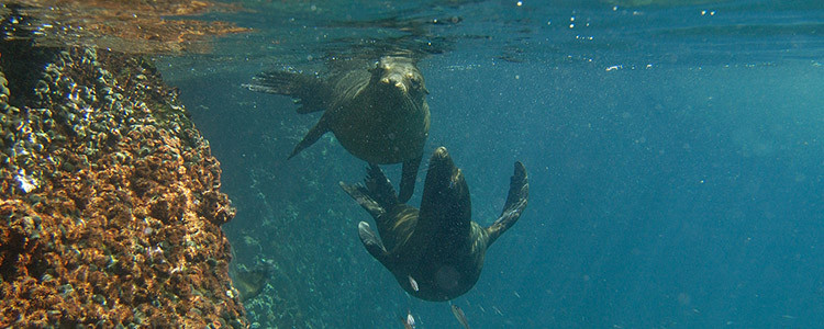 Galapagos Islands adventure expert travel - Santiago, Floreana, Espanola sea lions