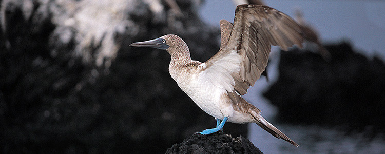 Galapagos Islands adventure travel - Sante Fe Island, Isabela birds