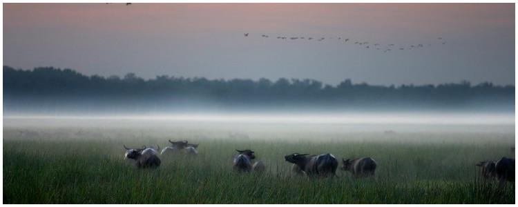 Custom wildlife adventure Australia vacation- Bamurru Plains—a private buffalo property