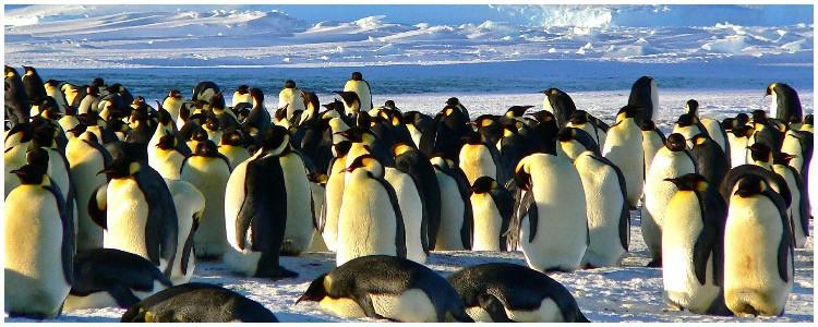Custom wildlife adventure vacation- penguins in Antarctica
