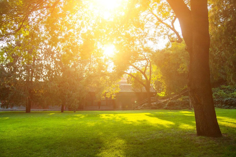 SunnyBackyard.jpg