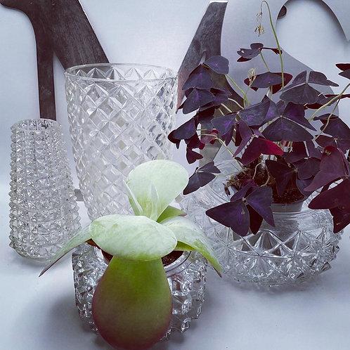 Vase, cache-pot, abat-jour en verre moulé années 50