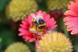 Buzzy Buzzy Bee Bee!_.jpg