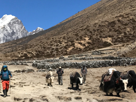 Why the Mountains