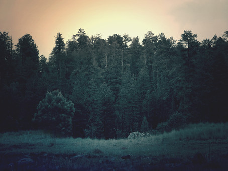 Earth Consciousness & Evolving Frameworks
