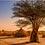 Thumbnail: Éthiopie Forêt Kaffa Indigène Torréfaction Spécialisée
