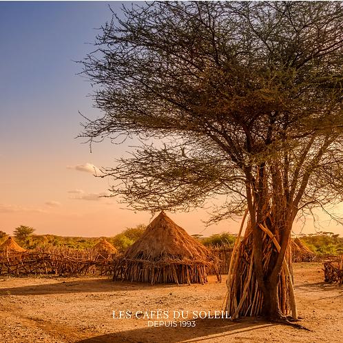 Éthiopie Forêt Kaffa Indigène Torréfaction Spécialisée