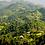 Thumbnail: Guatemala Antigua Torréfaction Noire