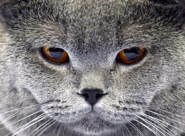 cat calm and alert.jpg
