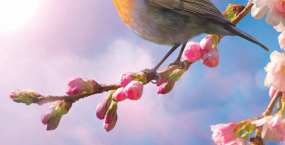 'Spring Robin'