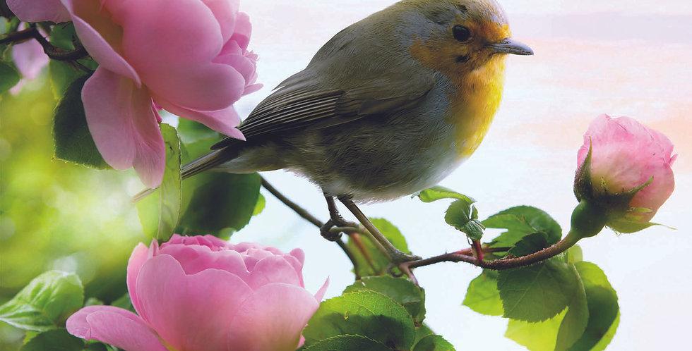 'Rose Robin'