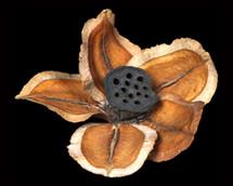 Jackranda 5 Petals with Lotus Centre