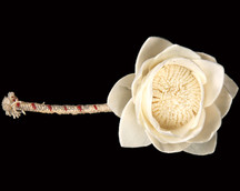 Sola China Rose with Wick