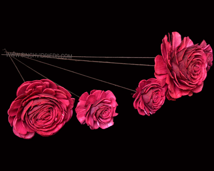 Sola Skin Beauty Rose on WST Fuxia.jpg
