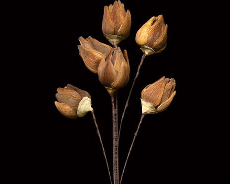 Arti Pod 12 Petals Golden Mushroom Base Natural Flower
